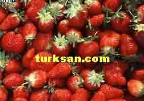 Meyve Sulaması
